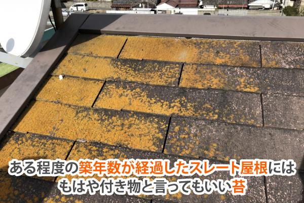 ある程度の築年数が経過したスレート屋根にはもはや付き物と言ってもいい苔