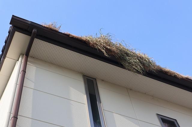 愛荘町K様邸にて害鳥被害の為に屋根高圧洗浄・落ち葉除けネット設置